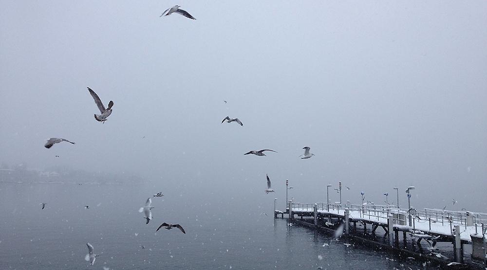 seagulls Zurich