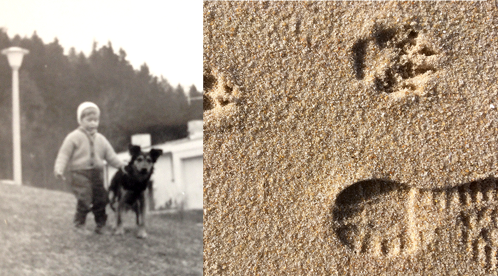favourite dog and traces in the sand